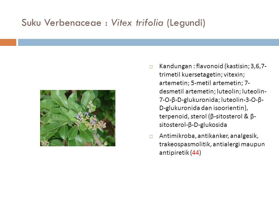 Suku Verbenaceae : Vitex trifolia (Legundi)