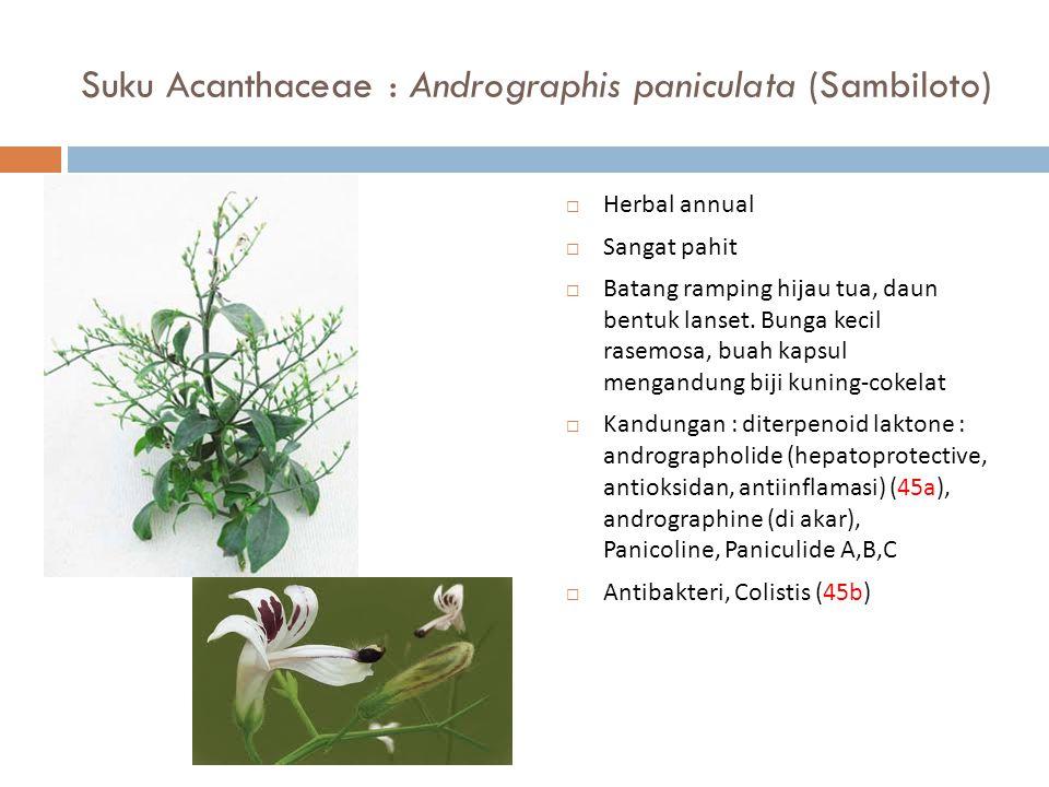 Suku Acanthaceae : Andrographis paniculata (Sambiloto)