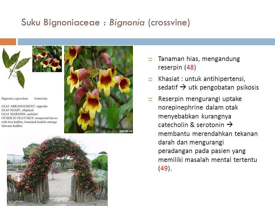 Suku Bignoniaceae : Bignonia (crossvine)