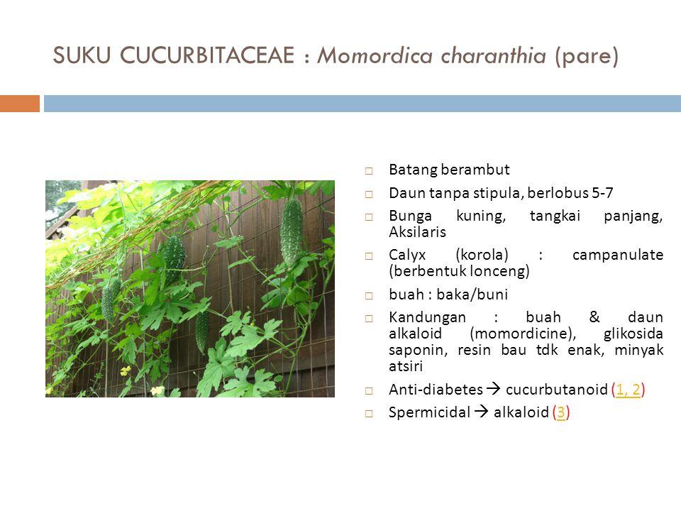 SUKU CUCURBITACEAE : Momordica charanthia (pare)