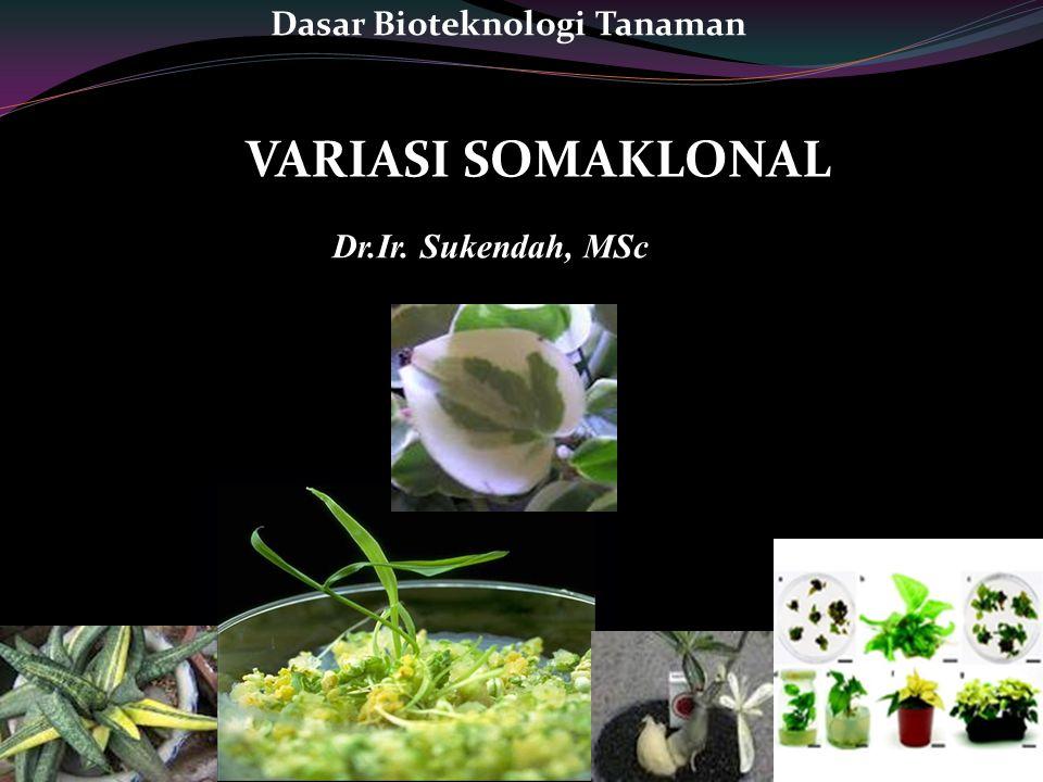 Dasar Bioteknologi Tanaman
