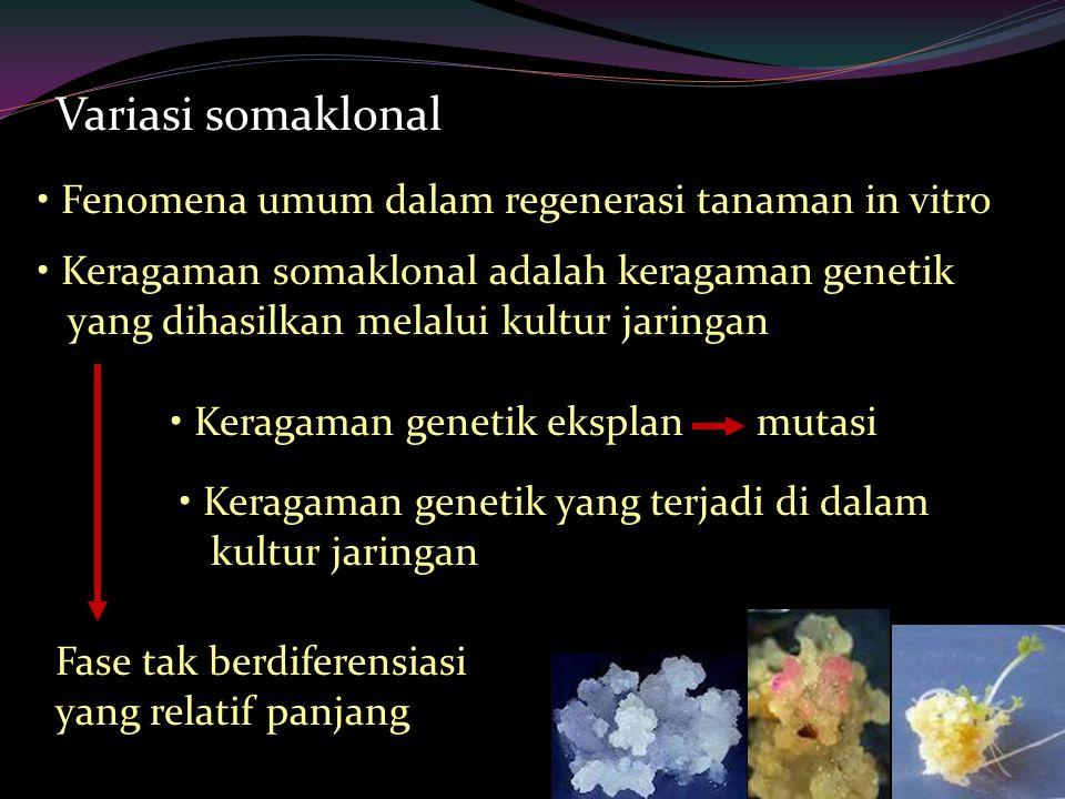Variasi somaklonal Fenomena umum dalam regenerasi tanaman in vitro