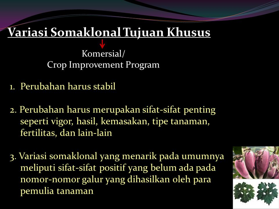 Crop Improvement Program