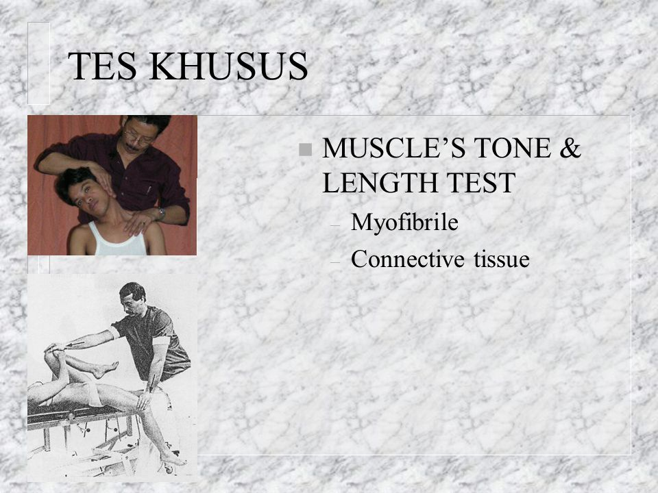 TES KHUSUS MUSCLE'S TONE & LENGTH TEST Myofibrile Connective tissue