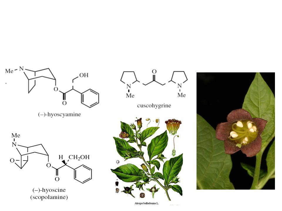 Atropa belladona Herba: 0,3 – 0,6% alkaloid terdiri atas (-)-hyosiamin, (-)-hyosin.