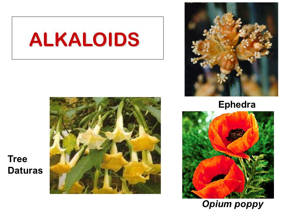 ALKALOIDS Ephedra Tree Daturas Opium poppy
