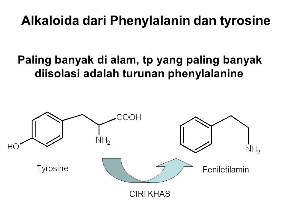 Alkaloida dari Phenylalanin dan tyrosine