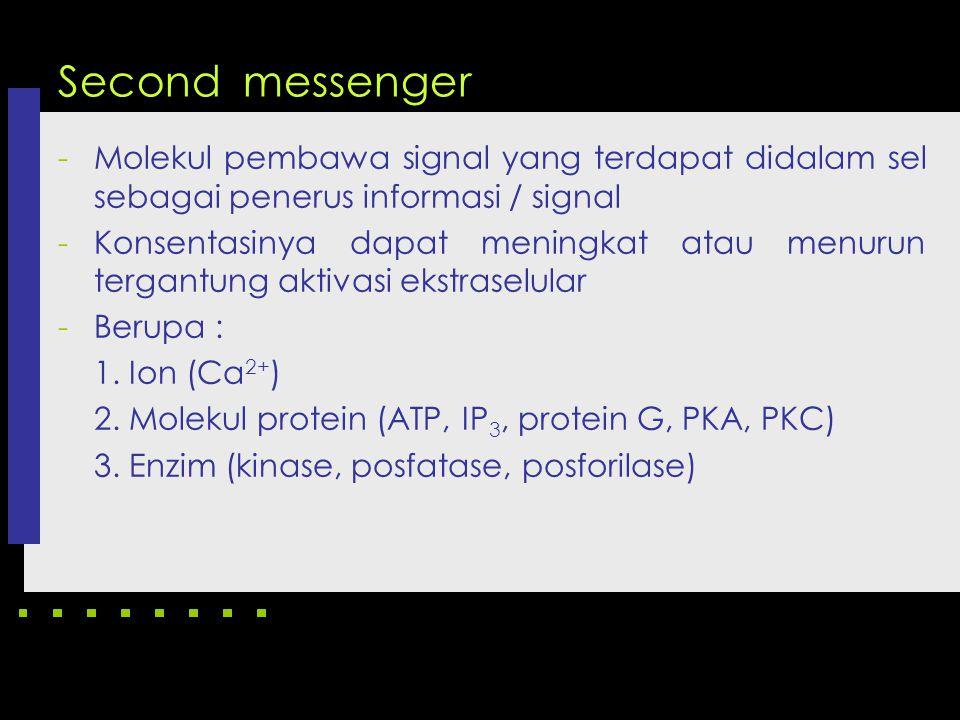 Second messenger Molekul pembawa signal yang terdapat didalam sel sebagai penerus informasi / signal.