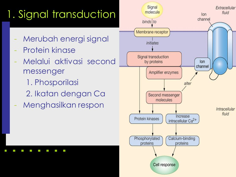 1. Signal transduction Merubah energi signal Protein kinase
