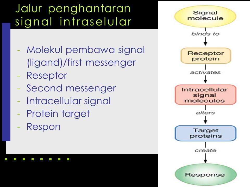 Jalur penghantaran signal intraselular