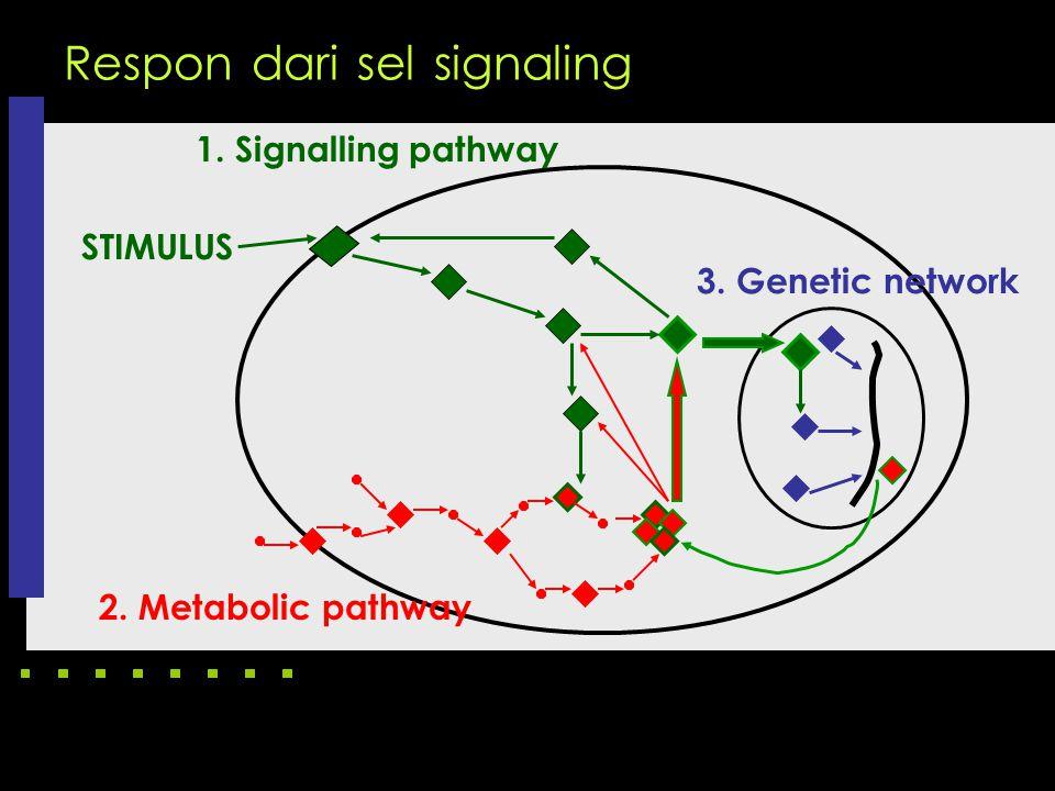 Respon dari sel signaling