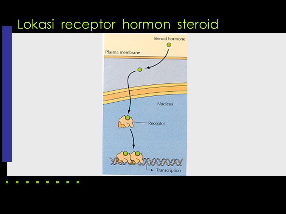 Lokasi receptor hormon steroid
