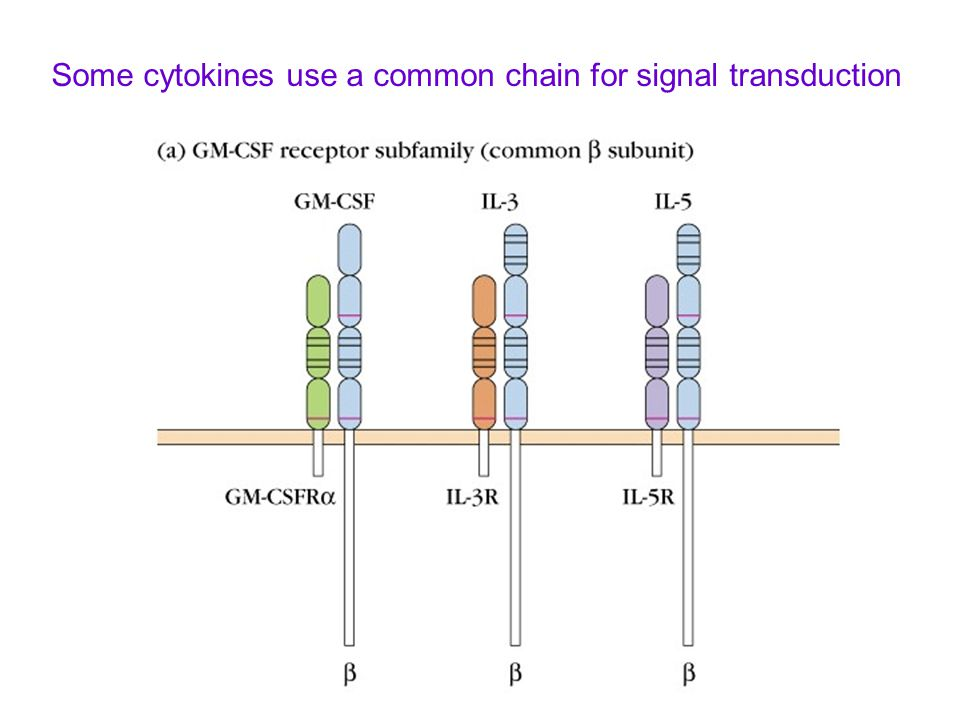 Some cytokines use a common chain for signal transduction