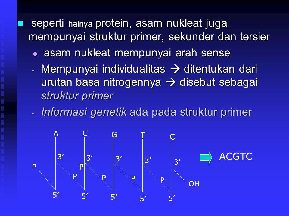 asam nukleat mempunyai arah sense