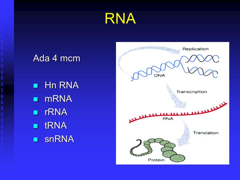 RNA Ada 4 mcm Hn RNA mRNA rRNA tRNA snRNA