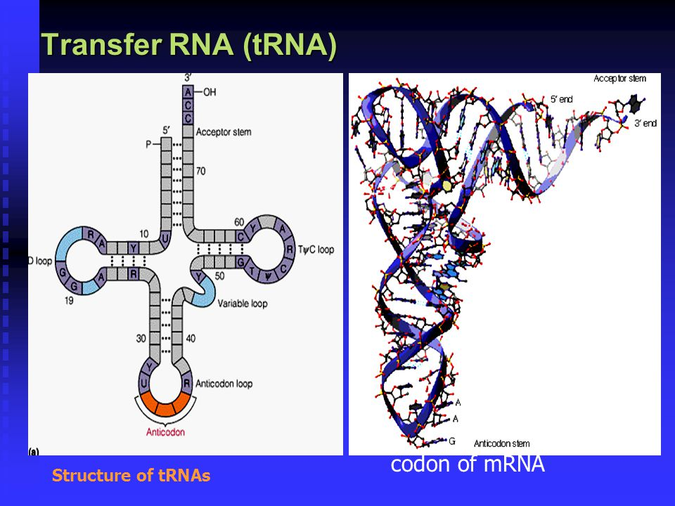 Transfer RNA (tRNA) composed of  a nucleic acid and