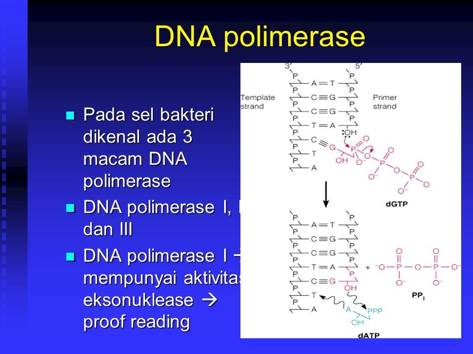 DNA polimerase Pada sel bakteri dikenal ada 3 macam DNA polimerase