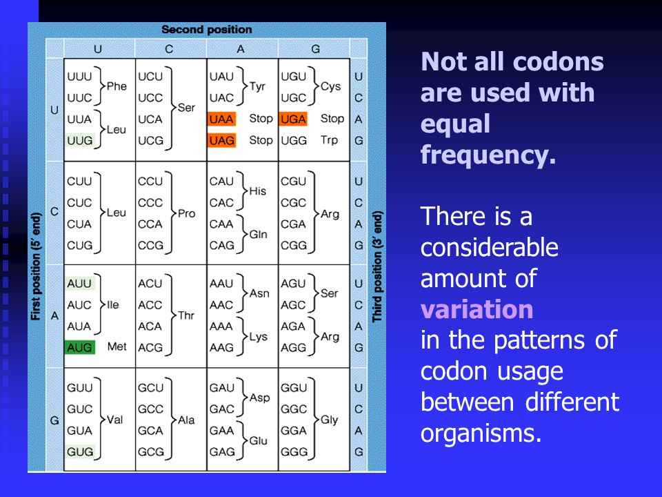 Not all codons are used with equal frequency.
