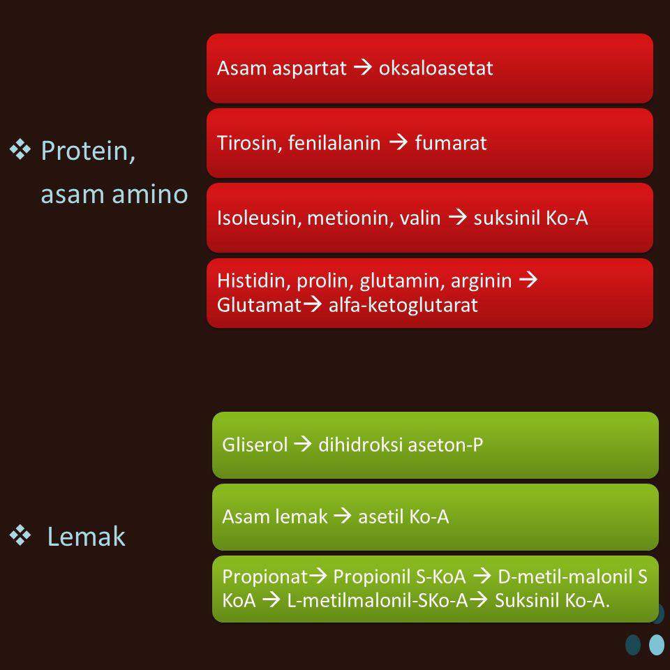 Protein, asam amino Lemak Asam aspartat  oksaloasetat