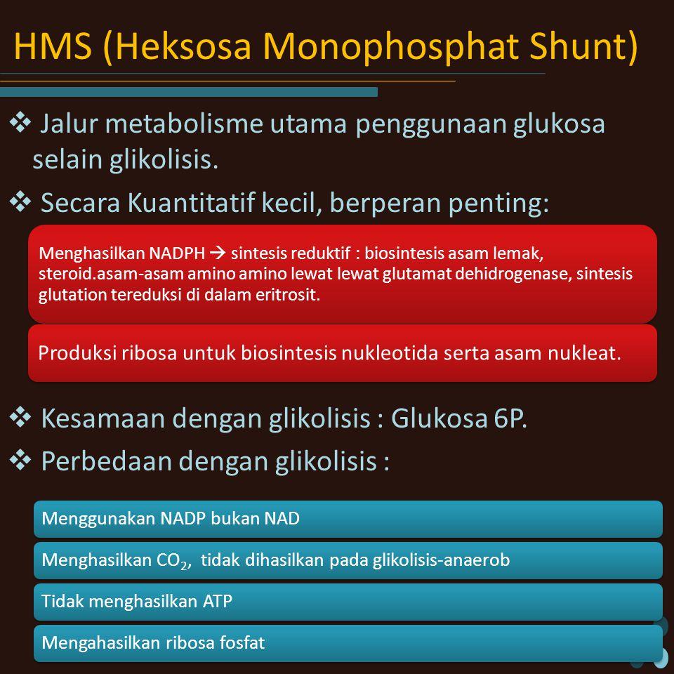 HMS (Heksosa Monophosphat Shunt)