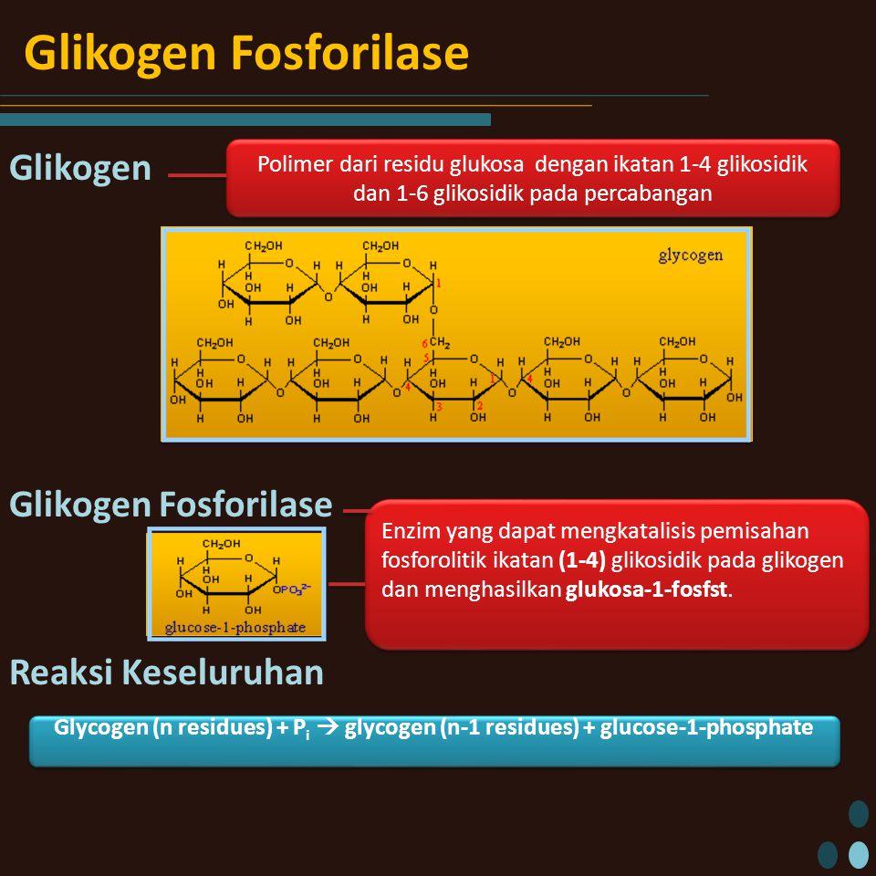 Glikogen Fosforilase Glikogen Glikogen Fosforilase Reaksi Keseluruhan