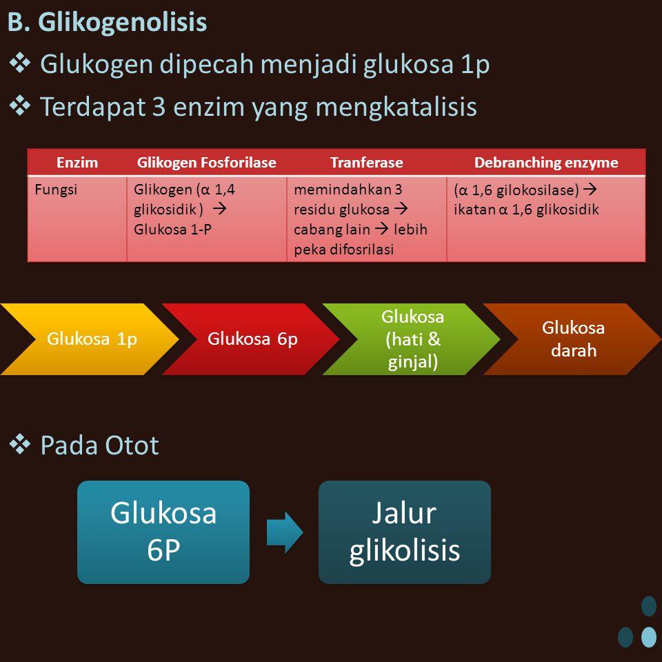 Glukosa (hati & ginjal)
