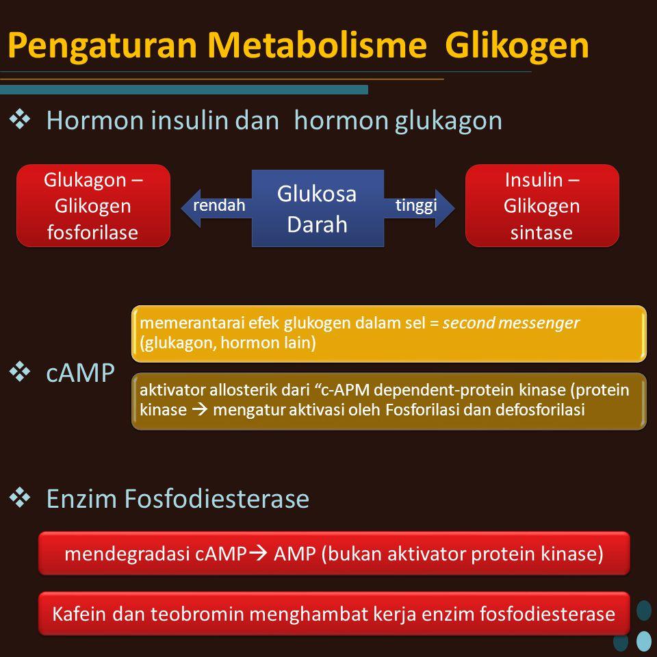 Pengaturan Metabolisme Glikogen