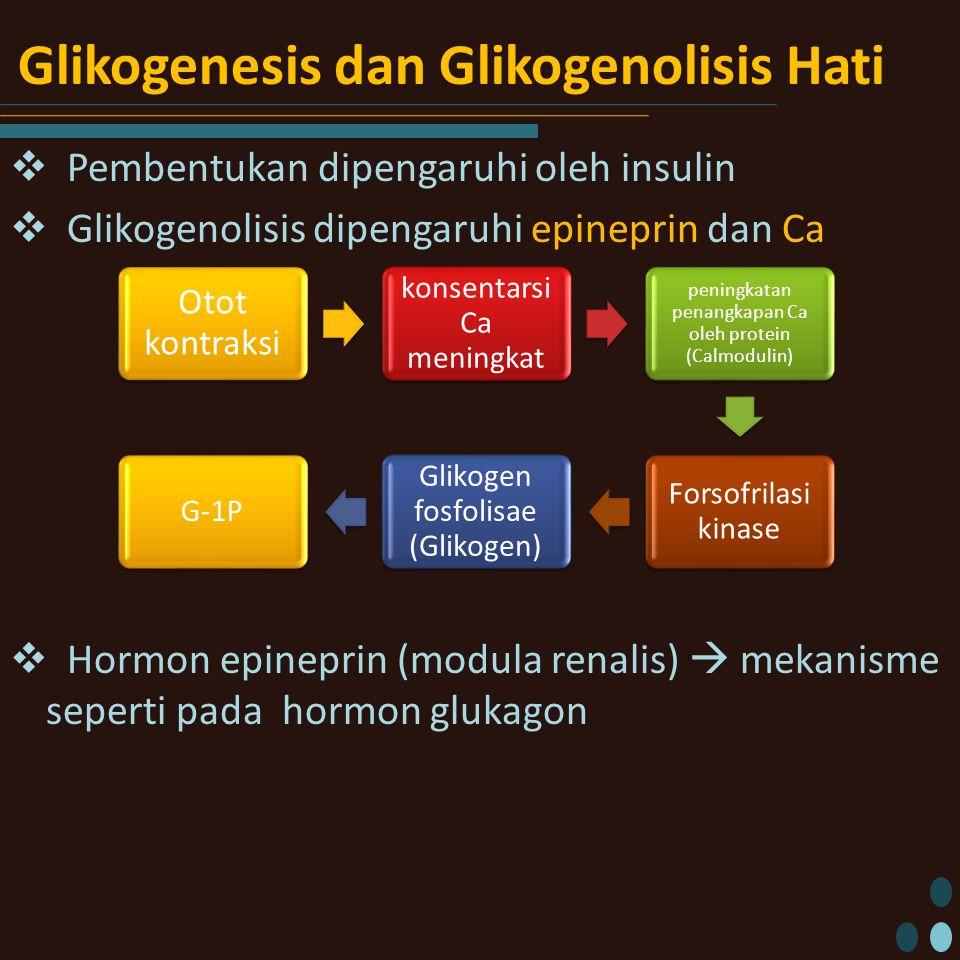 Glikogenesis dan Glikogenolisis Hati