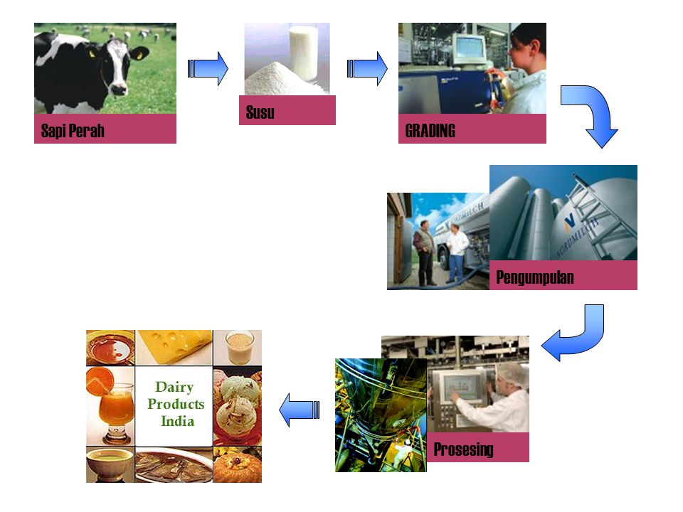 Susu Sapi Perah GRADING Pengumpulan Prosesing