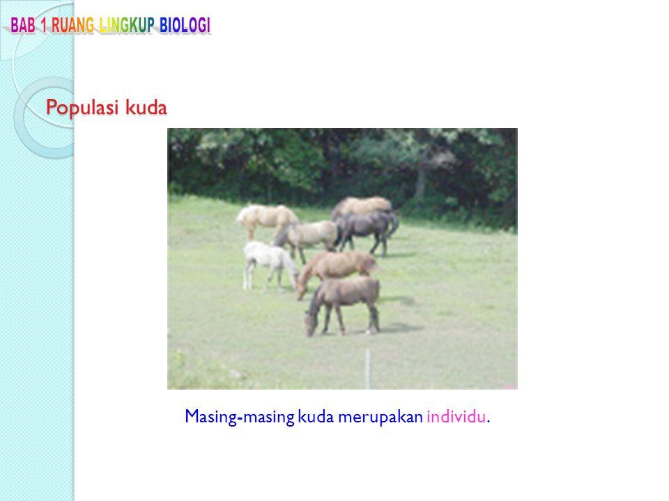 Populasi kuda Masing-masing kuda merupakan individu.