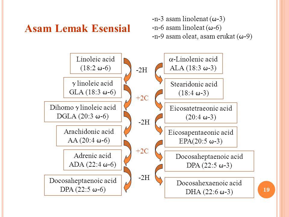 Asam Lemak Esensial n-3 asam linolenat (-3) n-6 asam linoleat (-6)