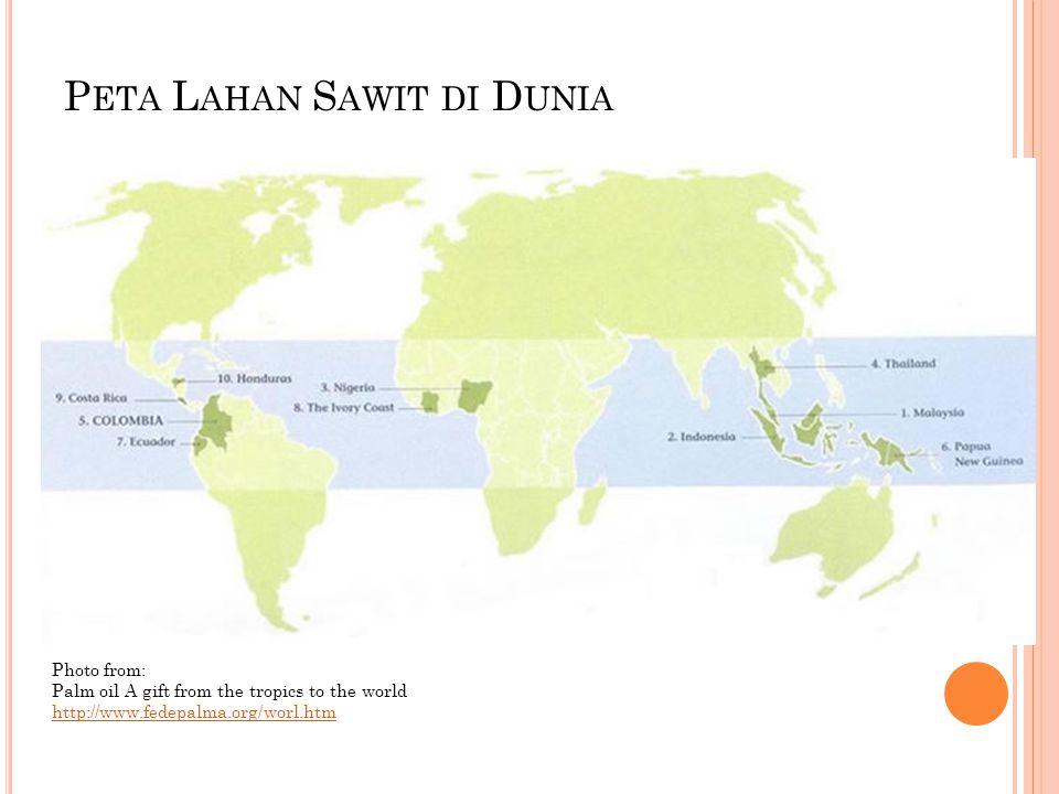 Peta Lahan Sawit di Dunia