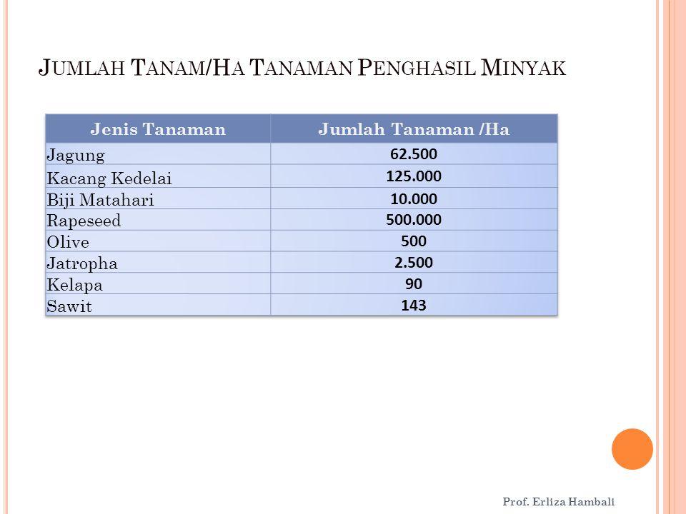 Jumlah Tanam/Ha Tanaman Penghasil Minyak