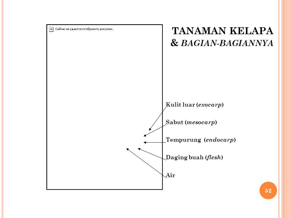 TANAMAN KELAPA & BAGIAN-BAGIANNYA