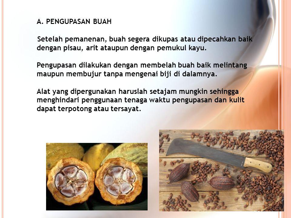 A. PENGUPASAN BUAH Setelah pemanenan, buah segera dikupas atau dipecahkan baik dengan pisau, arit ataupun dengan pemukul kayu.
