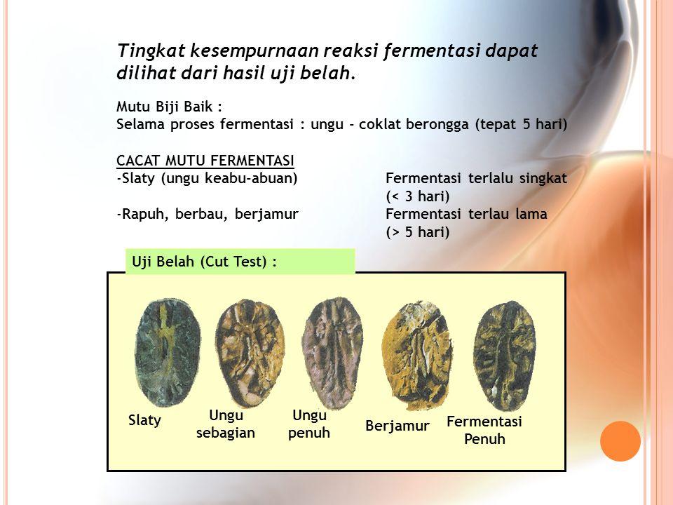 Tingkat kesempurnaan reaksi fermentasi dapat dilihat dari hasil uji belah.