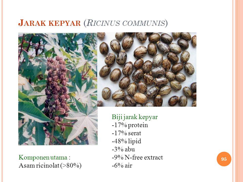 Jarak kepyar (Ricinus communis)