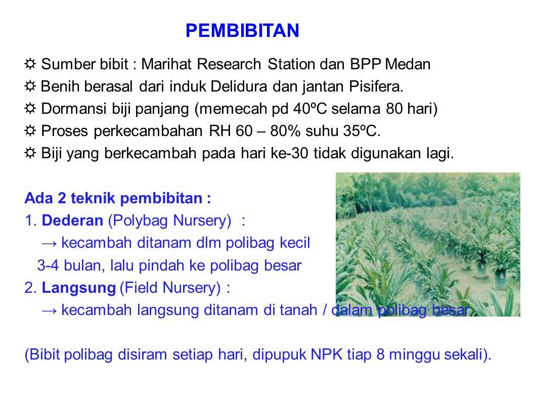 PEMBIBITAN ☼ Sumber bibit : Marihat Research Station dan BPP Medan