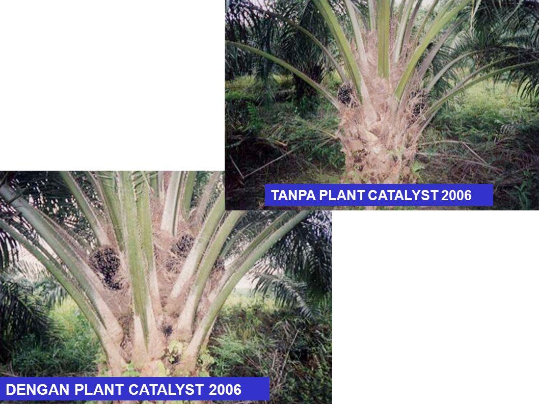 TANPA PLANT CATALYST 2006 DENGAN PLANT CATALYST 2006