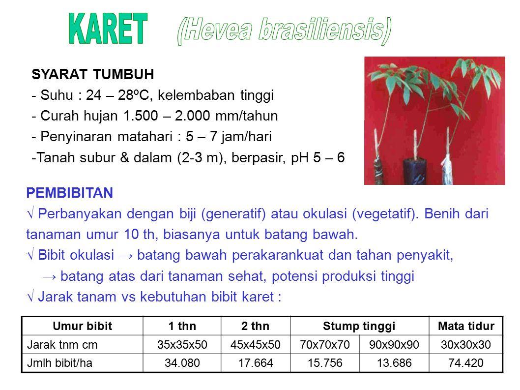 KARET (Hevea brasiliensis) SYARAT TUMBUH