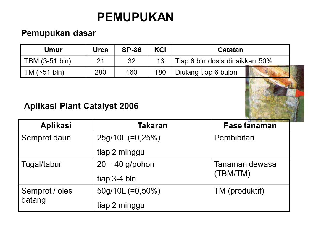 PEMUPUKAN Pemupukan dasar Aplikasi Plant Catalyst 2006 Aplikasi