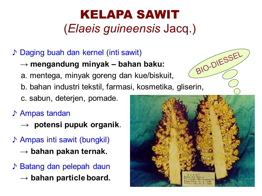 (Elaeis guineensis Jacq.)