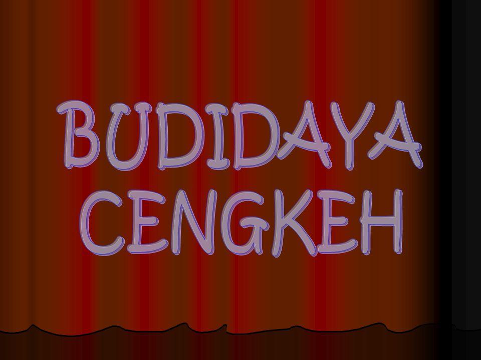 BUDIDAYA CENGKEH