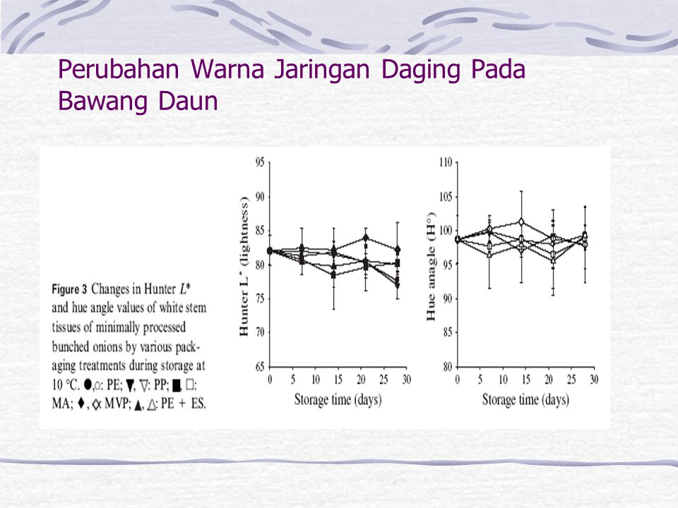 Perubahan Warna Jaringan Daging Pada Bawang Daun