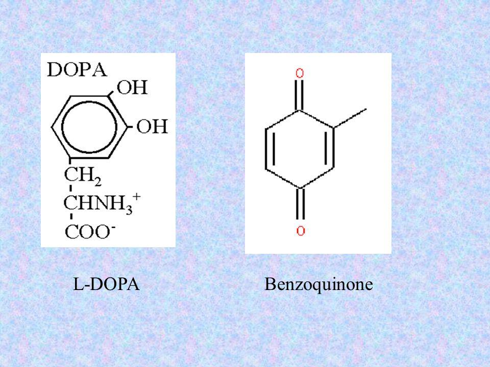 L-DOPA Benzoquinone