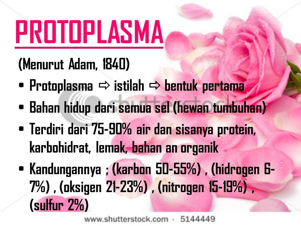 PROTOPLASMA (Menurut Adam, 1840)
