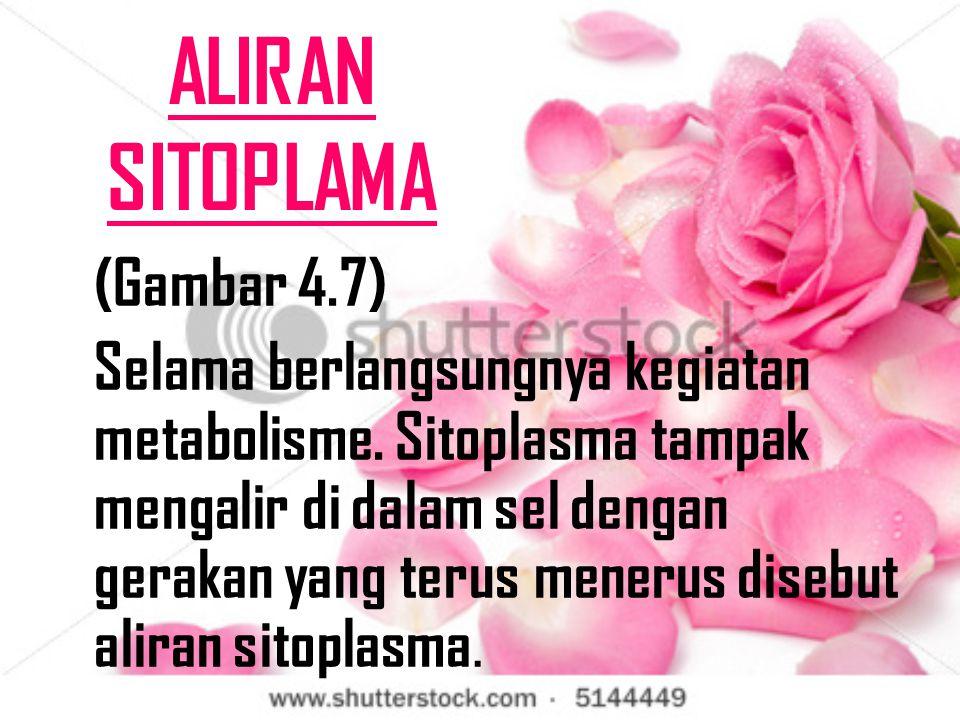 ALIRAN SITOPLAMA (Gambar 4.7)
