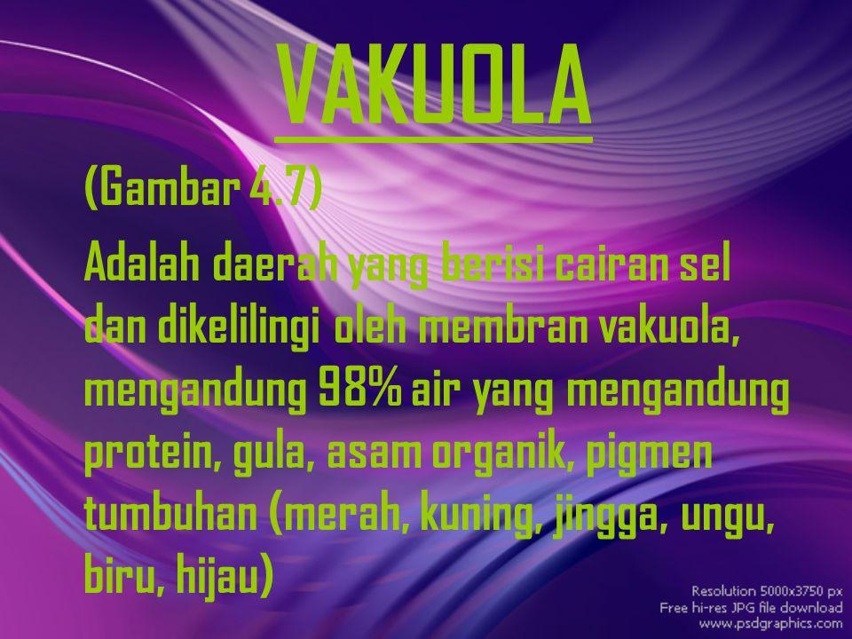 VAKUOLA (Gambar 4.7)