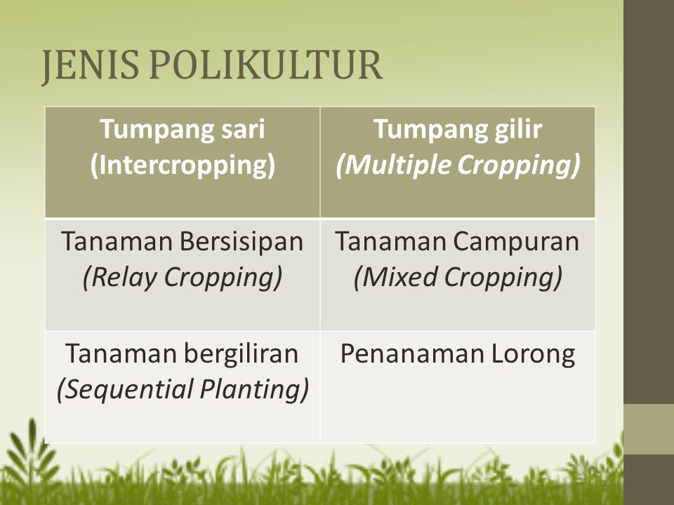 Tumpang sari (Intercropping) Tumpang gilir (Multiple Cropping)