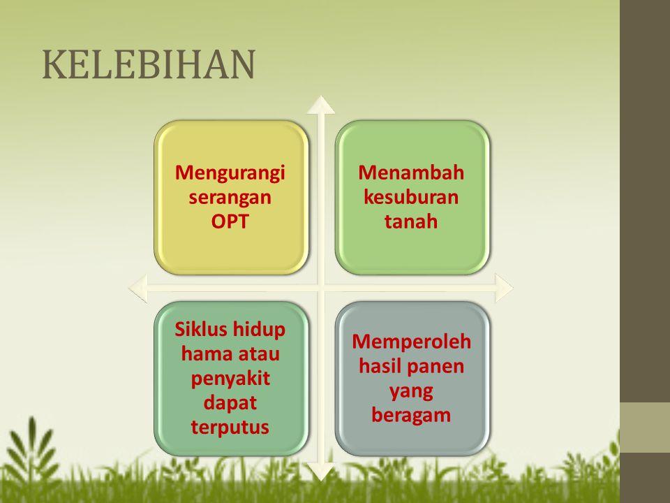 KELEBIHAN Mengurangi serangan OPT Menambah kesuburan tanah